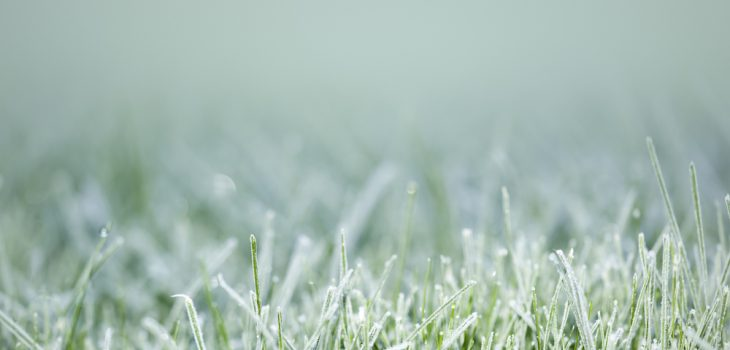 easy steps to winterize your lawn and garden