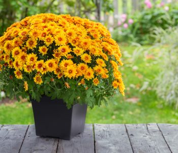 Tips on the Perfect Fall Planter or Centrepiece