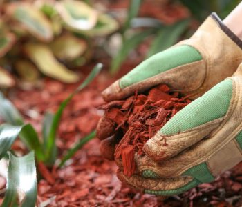 Tips on Protecting Your Landscaping During Renovations